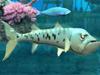 大鱼吃小鱼2012