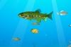 七彩鱼的世界