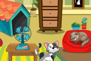 布置猫咪乐园
