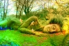 逃离梦幻森林