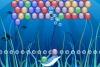 海底泡泡2