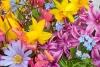 找到隐藏的花朵