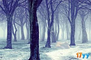 逃离雪域之地