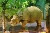 逃离野生动物园